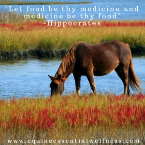 The Foundation of Horse Health Starts with Nutrition