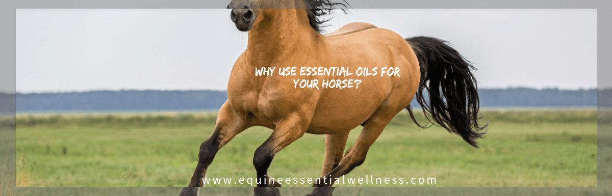 Why use Essential Oils with Your Horse?