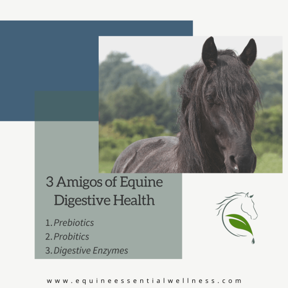equine probitoics - reduce risk of colic in horses