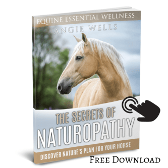 How to Naturally Improve the Health of Your Horse