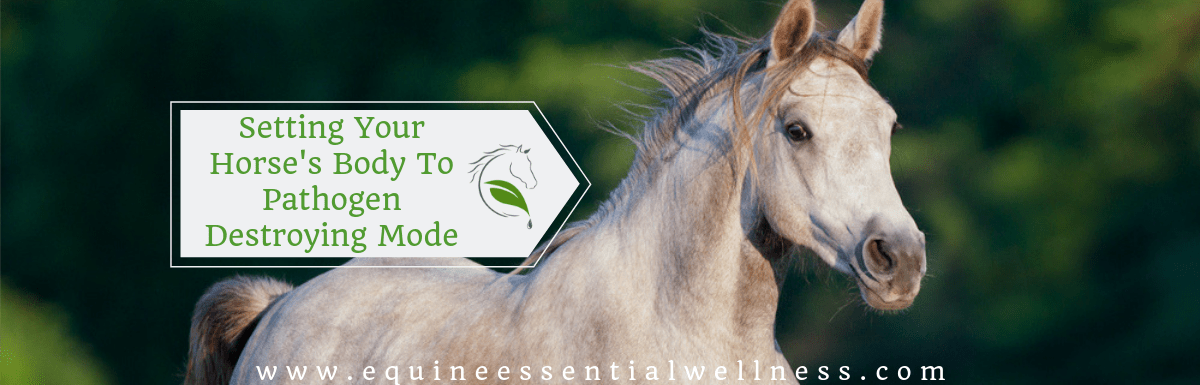Setting Your Horse's Body To Pathogen Destroying Mode