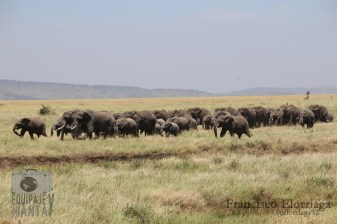 Familia de elefantes del Serengeti Foto: Francisco Elorriaga Instagram: @elorriaga92