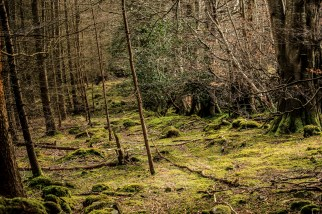 Tollymore Forest. Foto: Francisco Elorriaga