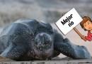 El desove de tortugas, la estafa de Tangalle (Sri Lanka)
