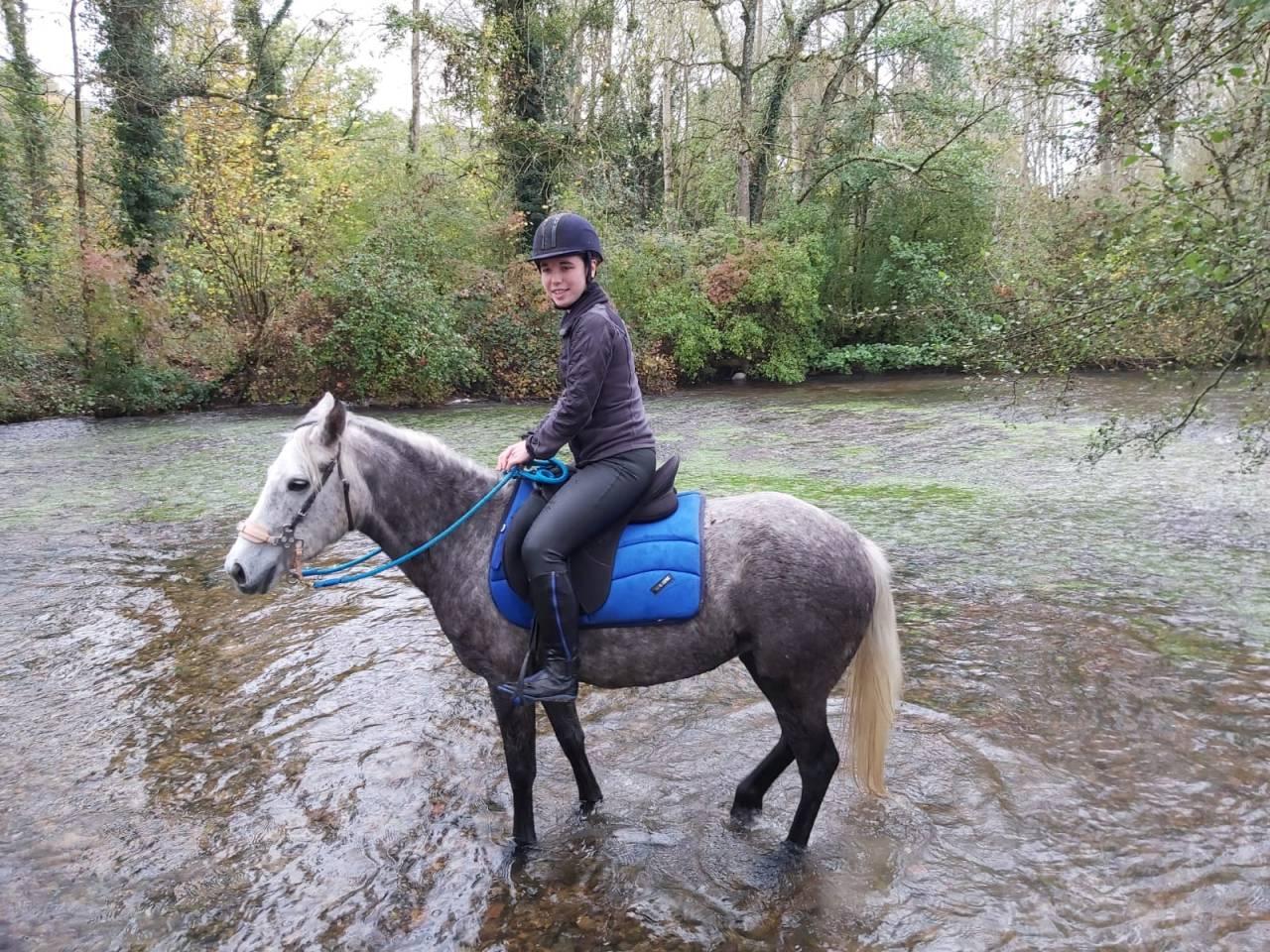 tapis burioni cheval 624004 acheter