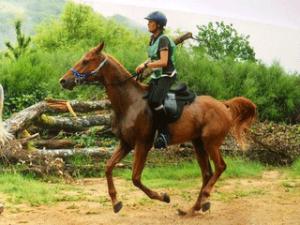 Karine-Sudre, femme avec un cheval