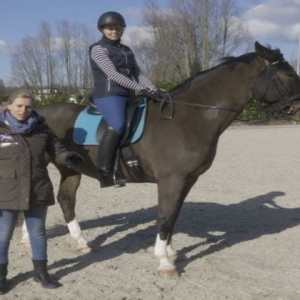 Compassionate Training for Today's Sport Horse – Topic 6