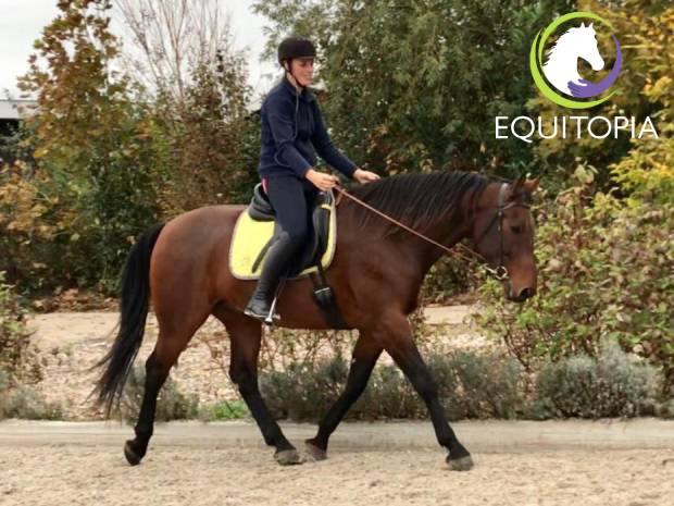 How to recognize a horse in vertical balance