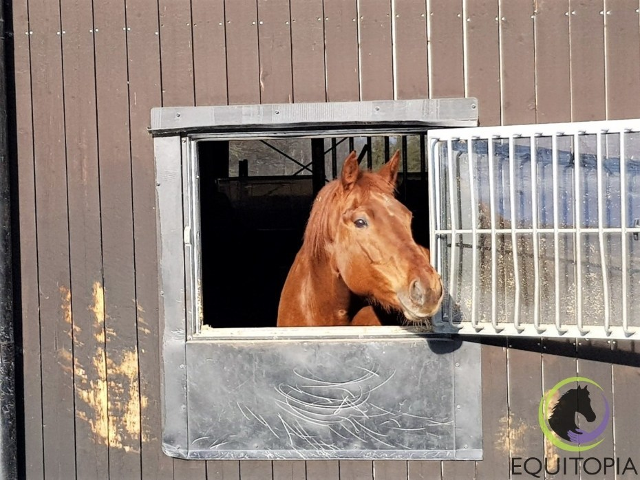 horse on box rest