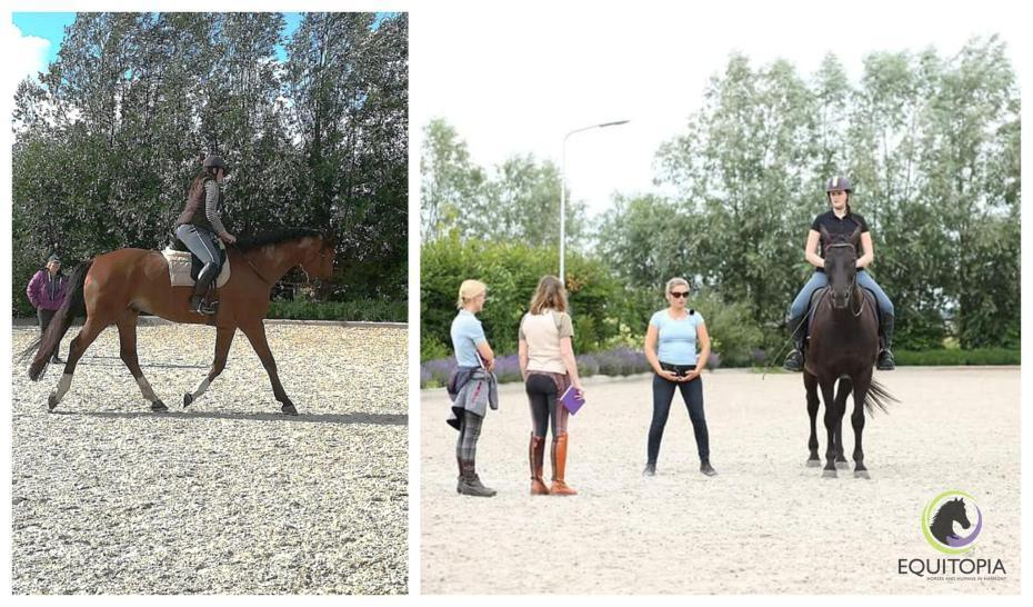 finding a trainer for rider and horse