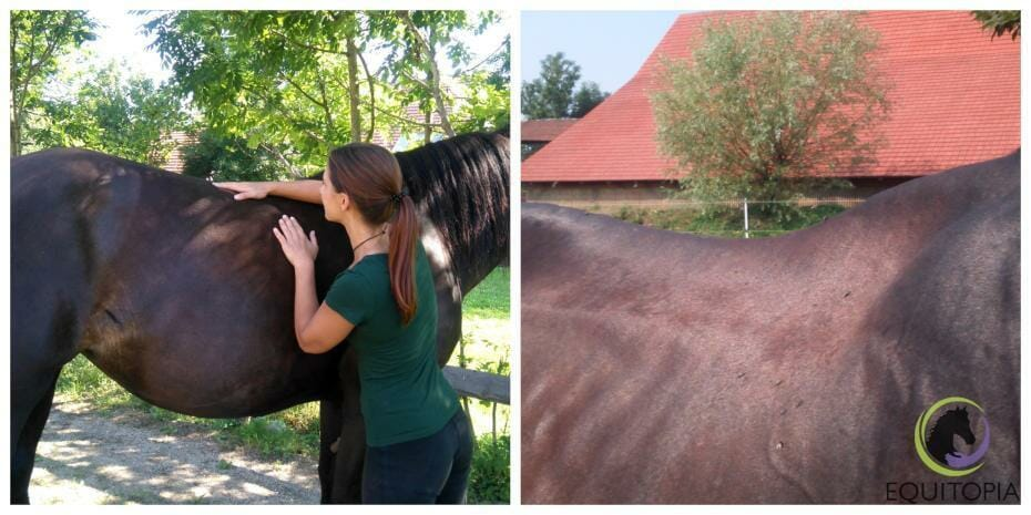 Recognizing back pain in horses