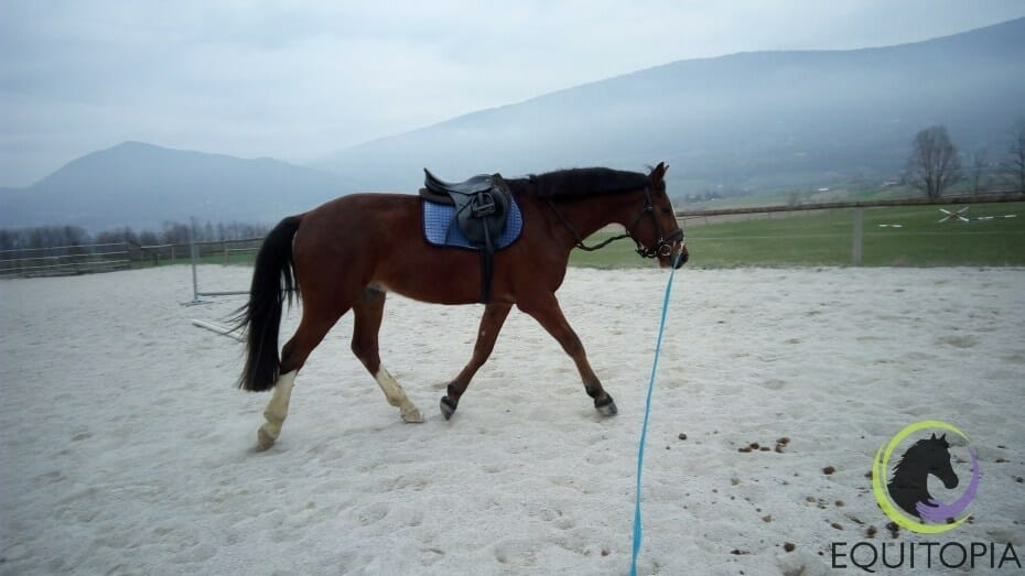 Training your horse
