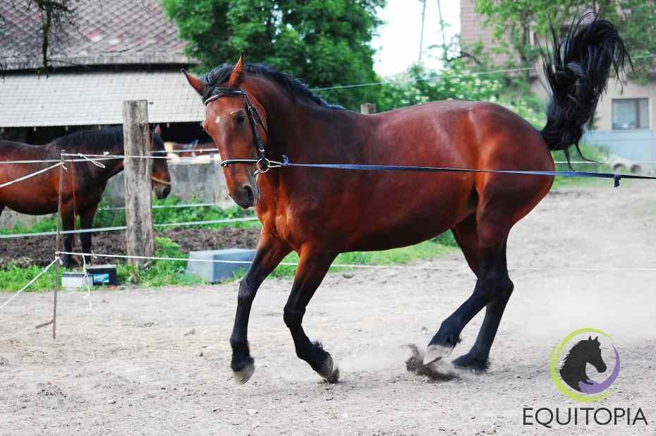 Training horse with professional trainer