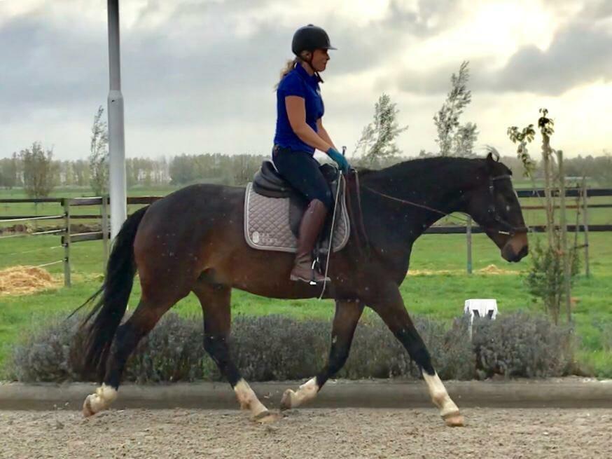 equine rehabilitation equitopia