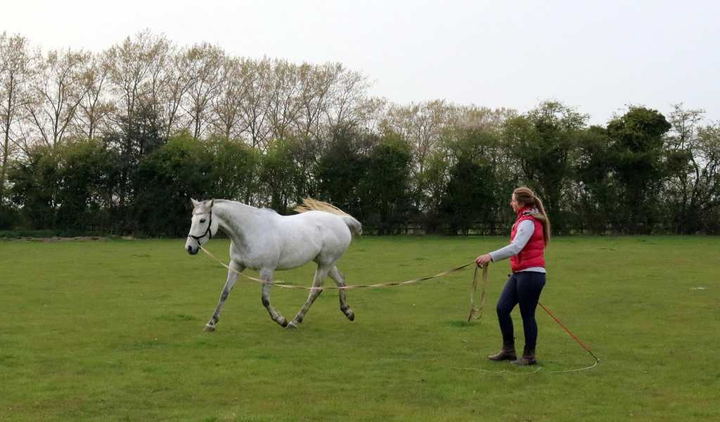 Help! My horse needs re-educating