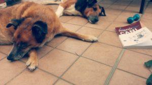 Menù da cani