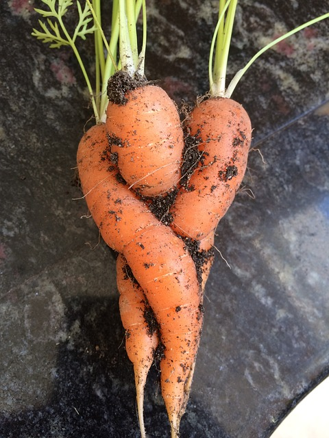 3 macerati utili per la difesa naturale dell'orto