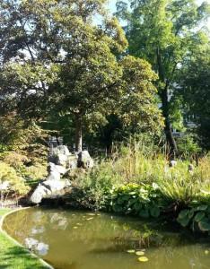 Jaradín Botánico Jardines escondidos en Amberes - 3 234x300 - Jardines escondidos en Amberes