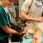 veterinarios publicos