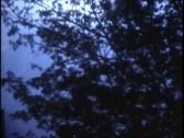 Puddle Lightning by Jarrett Hayman