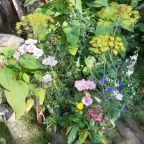 """Wettbewerb """"Insektenfreundliche Gärten"""""""