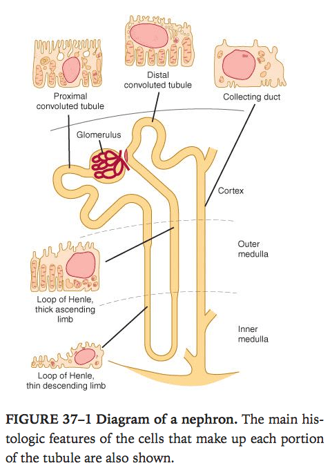 Week 15 physiology erexam ganongs review of medical physiology 24th edition ccuart Images