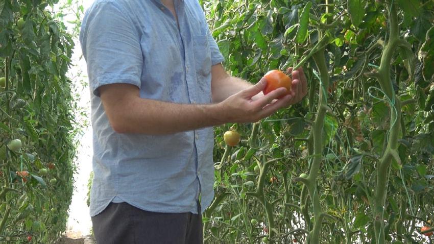 farmer-tom-min.jpg?fit=850%2C478&ssl=1