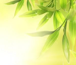 Bild-Bambus