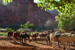 Kleine Ranch in Supai