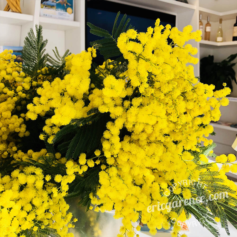 Affiche Bormes les mimosa Garence Meteo Macron webcam route