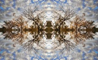 Tree Fixation