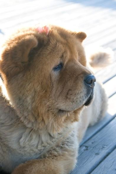 A very sad looking dog