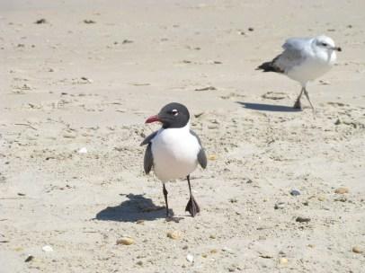 Black and White Seagulls