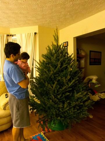 Scarlett looks at the New Tree