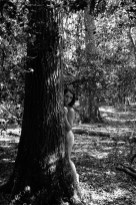 Nude in Nature with Erin-18 - web - bw