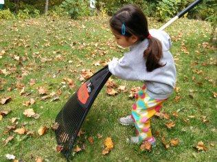 raking - 2015-10-24--009