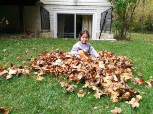 raking - 2015-10-24--011