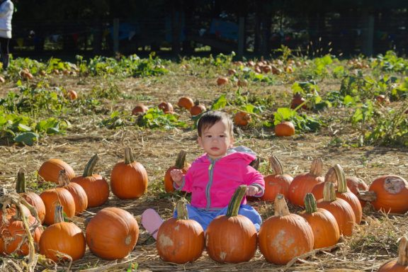 Stella's First time at the Pumpkin Patch