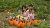Pumpkin Patch Portraits- 2018-10-07T08:54:56 - 011