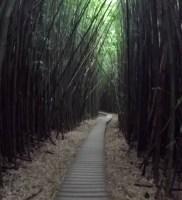 pipiwai trail 01
