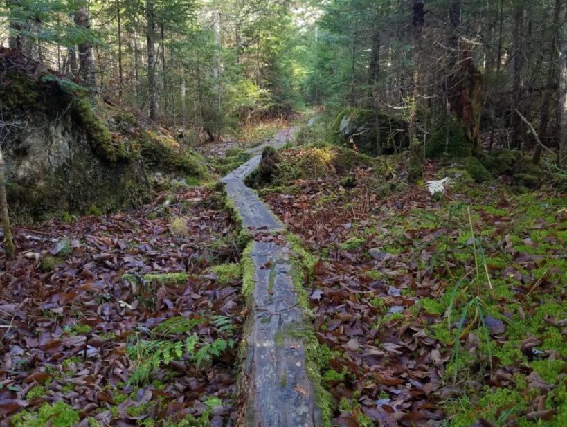 Boardwalks on Sentinel Mtn Trail