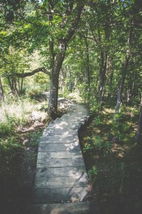 the counselling coaching psychotherapy journey