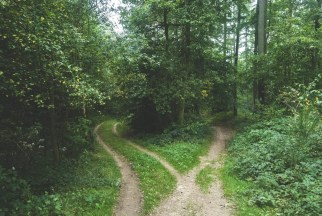 the counselling and psychotherapy journey - two paths