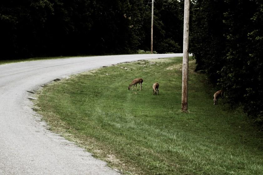 deer-vintage-muted2-100