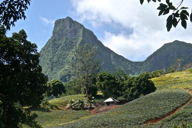 Mountains Moorea French Polynesia