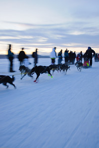 Sled Dog Race (Click for more images)