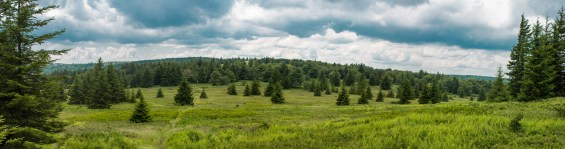 Panorama in the Dolly Sods Wilderness