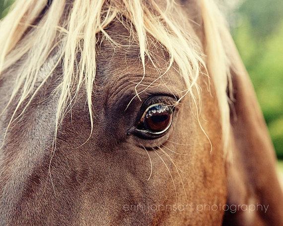 Erin Johnson Photography   Into a Horse's Eyes