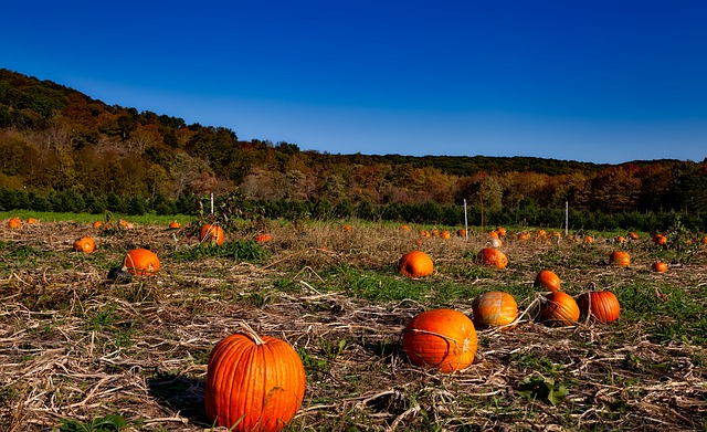20 fun fall activities for the family