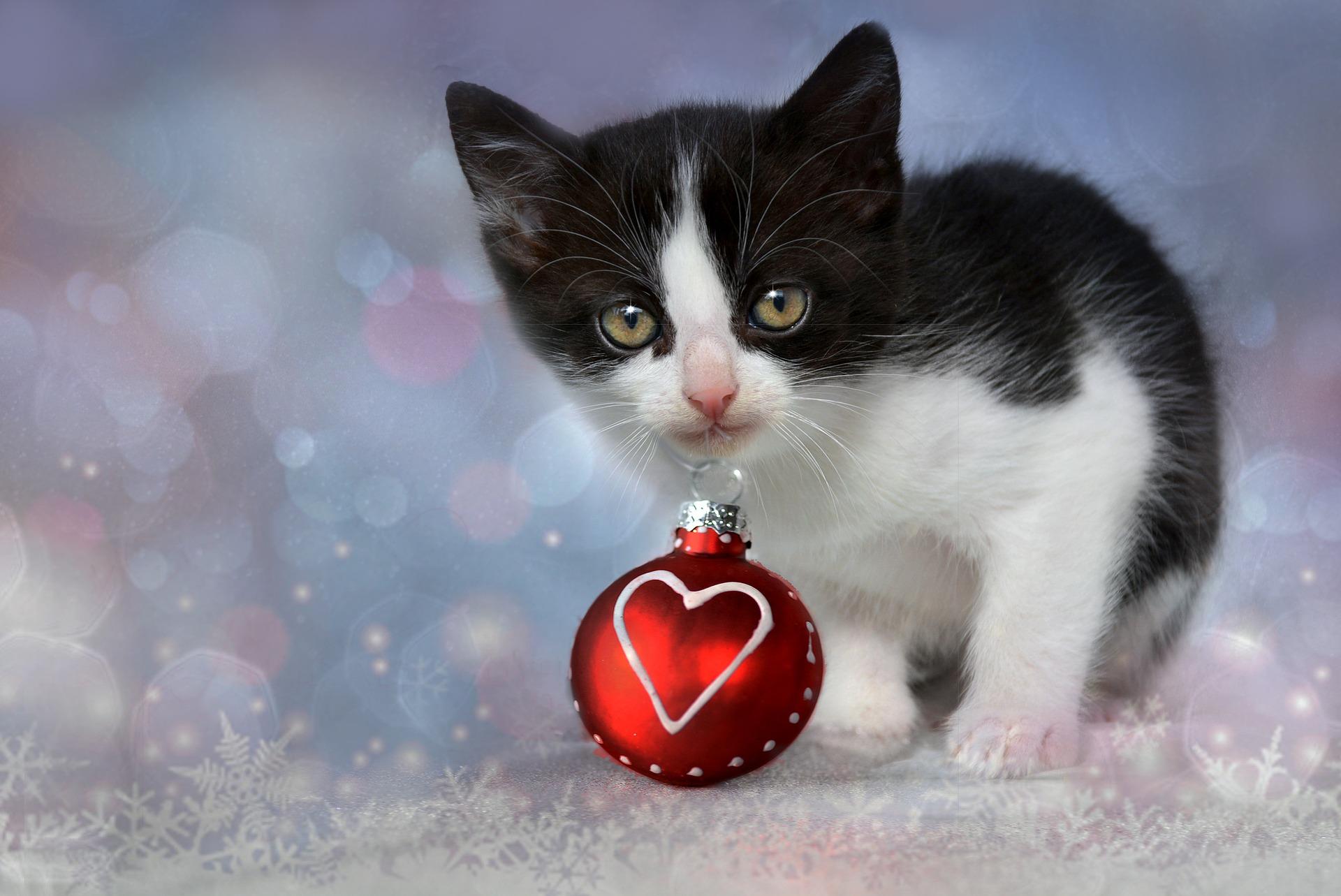 10 Pet Dangers at Christmas